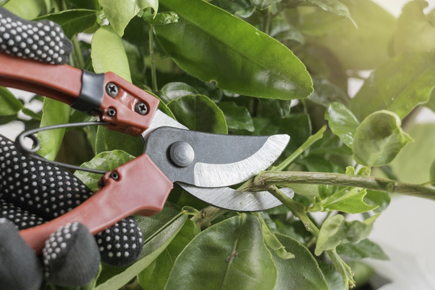how to lubricate pruning shears image